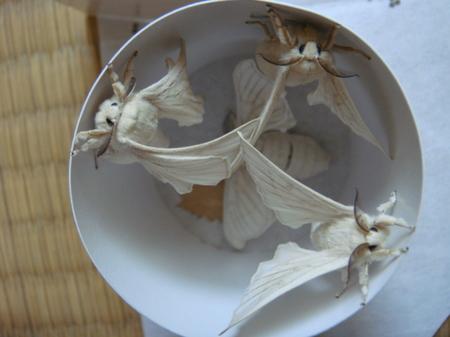 Dark_moth