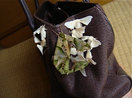 Early_summer_bag